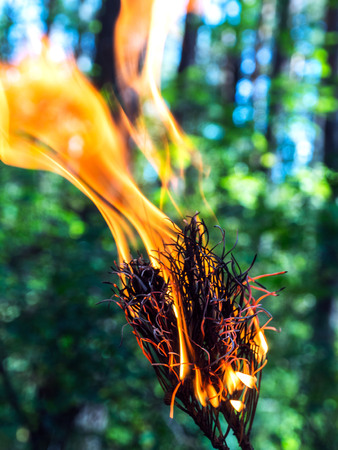 hellfire: A beautifully burning branch of a dry conifer tree. Blurred background. Safe for the environment and the forest.