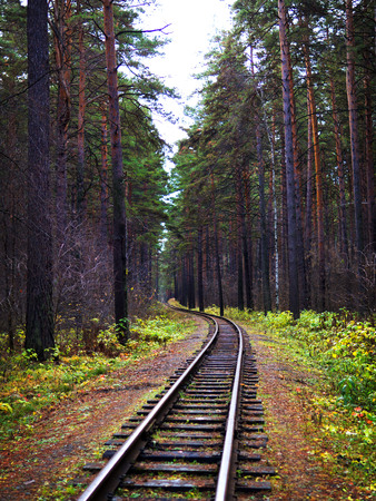 View along the railway. Game of summer and autumn colors. Tall trees. Stock Photo
