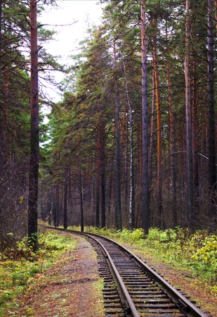 View along the railway. Game of summer and autumn colors. Tall trees. A distant perspective in the frame, the feeling of an endless road. Stock Photo