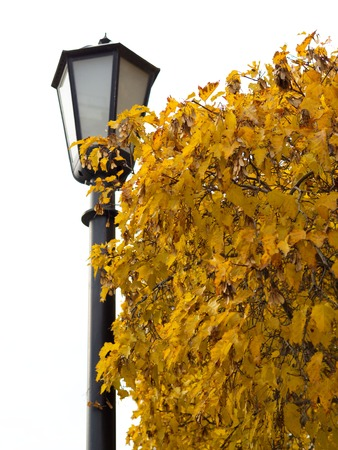 Autumn landscape trees with yellow leaves. Golden autumn trees and park lantern against yellowed autumn leaves. White background.