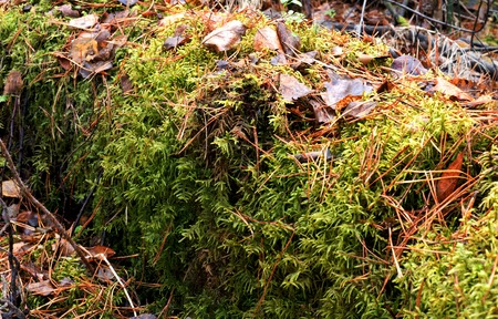Autumn foliage and green moss on a tree. The natural microclimate.