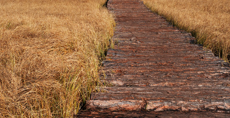 Wooden path in a field of rough boards. Autumn time. Banco de Imagens