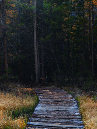 Wooden path in the dark forest of the swamp over the marsh. A mystical place. Banco de Imagens