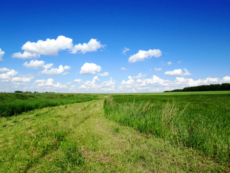 Summer landscape with green grass, road and clouds. Green grass and blue sky. Banco de Imagens