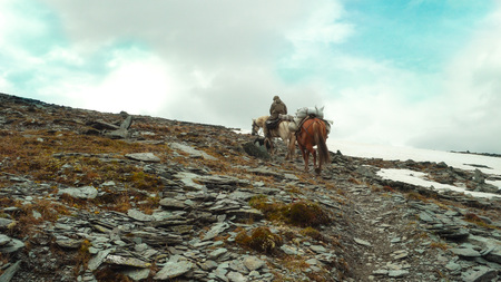 A rider with two horses walks along the path to the mountains.