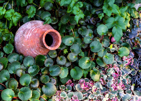 An ancient pitcher on the ground, in leaves of plants. 스톡 콘텐츠