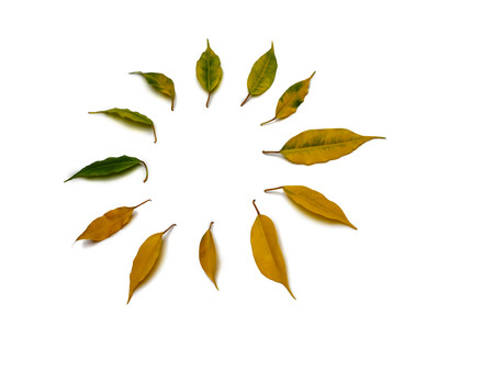 Isolated colorful autumn leaves herbarium, located in a circle on the white background. The gradual transition from yellow to green. 스톡 콘텐츠