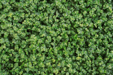Green leaf texture. Leaf texture background. Top view