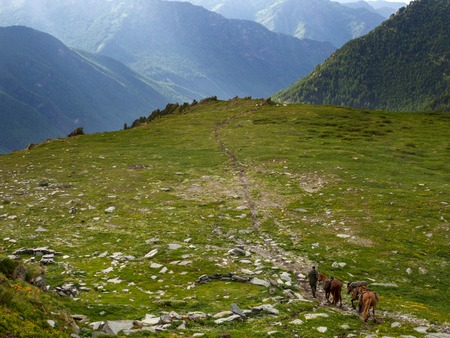A rider with three horses walks along the path to the mountains. Bags with provisions on horses.