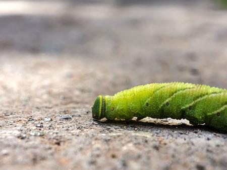 A large caterpillar crawls along the asphalt. Close-up Banco de Imagens