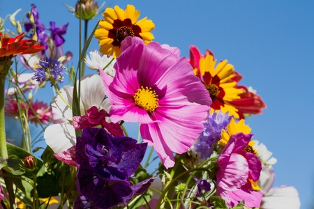 Colorful bunch of summer flowers against blue sky photo