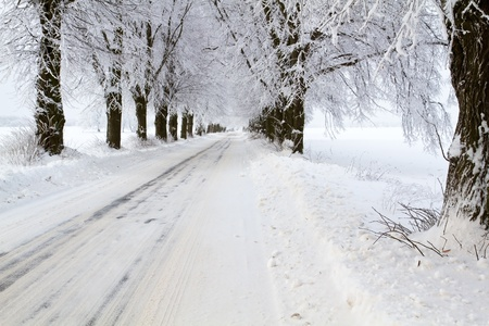 Avenue covered with snow, trees covered with hoarfrost photo