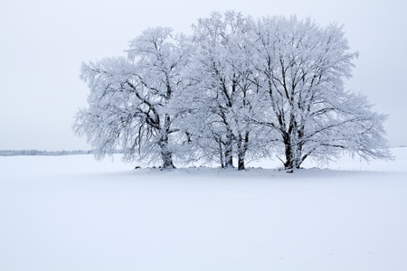 Winter landscape in the district Uckermark, Brandenburg, Germany photo