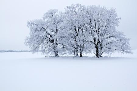 Winter landscape in the district Uckermark, Brandenburg, Germany photo