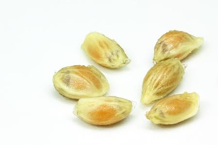 Lemonseeds Closeup on white background