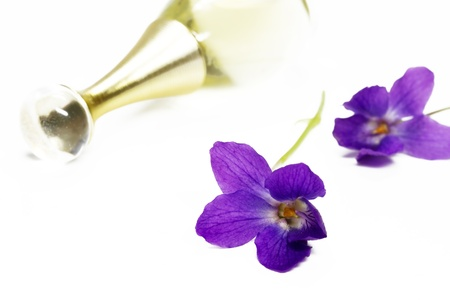 Purple Violets, isolated on white background photo