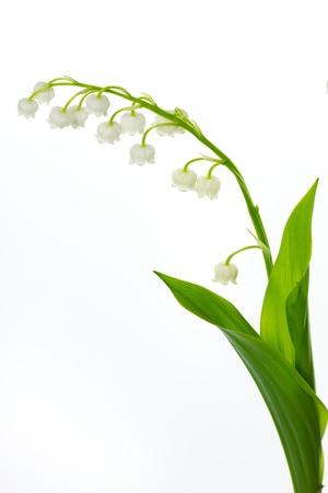 Lily of the valey (Convallaria majalis) Stock Photo - 10500335