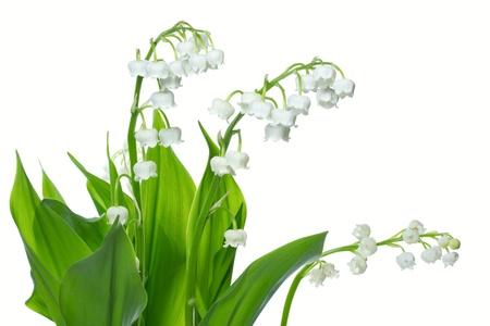Lily of the valey (Convallaria majalis) Stock Photo - 10500511