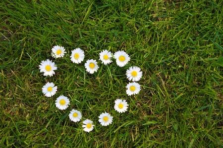 fidelidad: Corazón hecho de flores de margarita en el césped