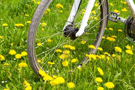 Spring meadow with blooming dandelion and bicycle photo