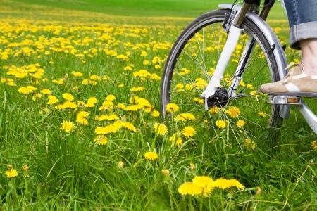 Prato di primavera con tarassaco in fiore e in bicicletta Archivio Fotografico - 10501046