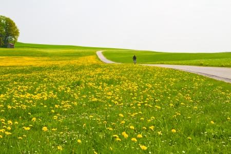 Frühling Wiese mit Fahrradfahrer und Landstraße Standard-Bild - 10500754