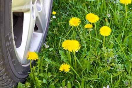 Car wheel crossing a spring meadow