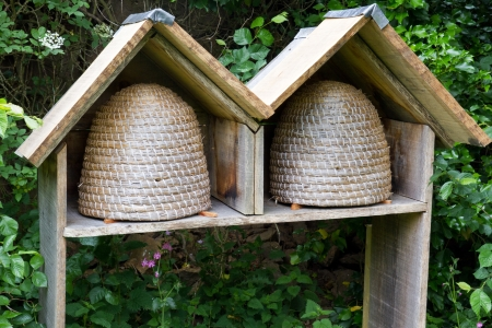 Two empty bee hives in a garden