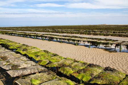 Oyster beds offshore the channel island of Jersey, UK Stock Photo