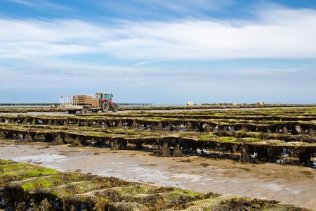 Oyster beds offshore the channel island of Jersey, UK photo