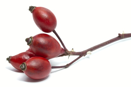 Rose hips of Rosa Canina, isolated