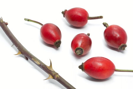 Rose hips and thorns of Rosa Canina, isolated