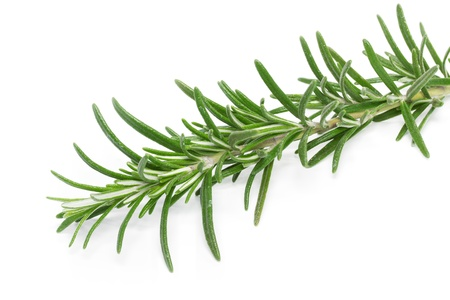 Rosemary  Rosmarinus officinalis  on white background Stock Photo