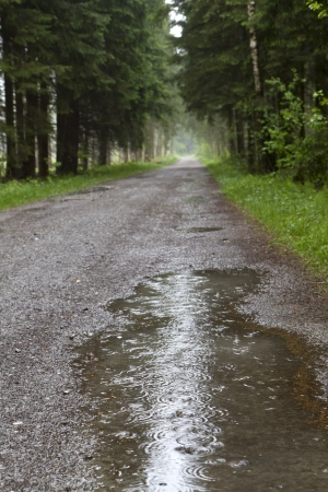 Forest road with a puddle of rain water