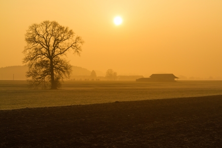 Leafless tree in the morning fog in rural Bavaria, Germany photo