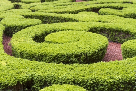 Boxwood in a park in Paris, France Stock Photo
