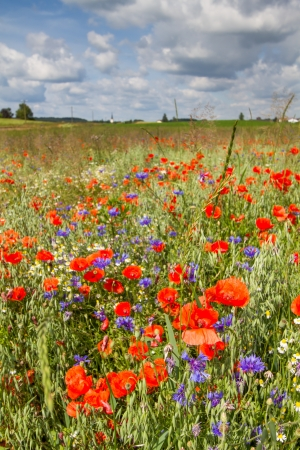 Spring flowers on a field in Bavaria, Germany photo