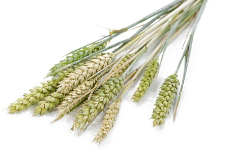 Wheat ears, shallow DOF Stock Photo - 14297094