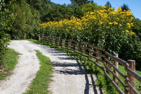 Gele Rudbeckia bloemen buiten in de tuin Stockfoto