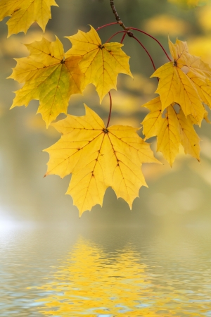 Autumn leaves reflecting in the water photo