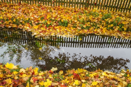 Autumn leaves near the water photo