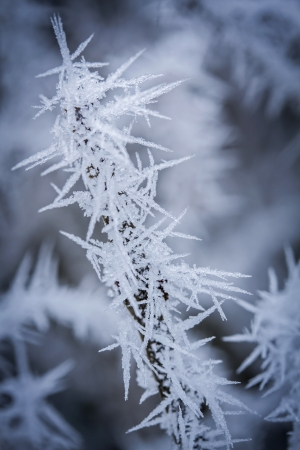 hoarfrost: Small branch covered with hoarfrost Stock Photo