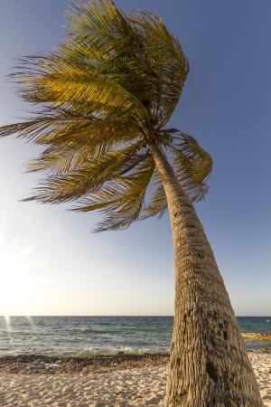 Palmboom bewegen in de wind