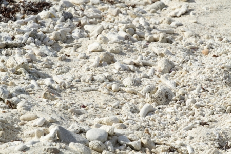 goniopora: Pieces of coral on the beach as background Stock Photo