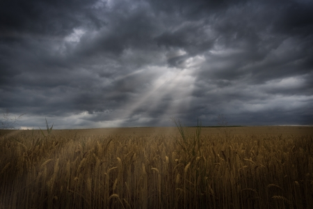 barley field: Sun rays breaking through clouds onto a barley field