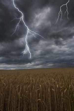barley field: Flash lightning over a barley field in Bavaria, Germany