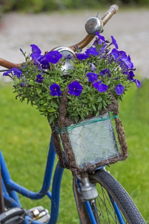 Vintage bicycle with flowers in a basket photo