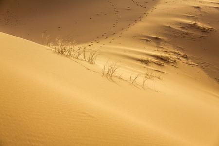 erg: Erg Chebbi desert, Morocco, North Africa