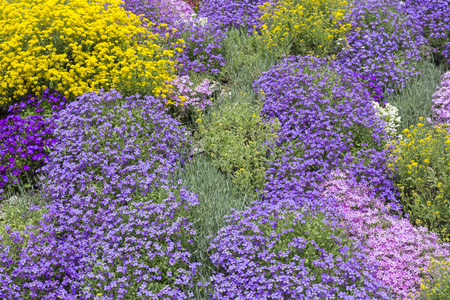 ground cover: Ground cover plants in spring