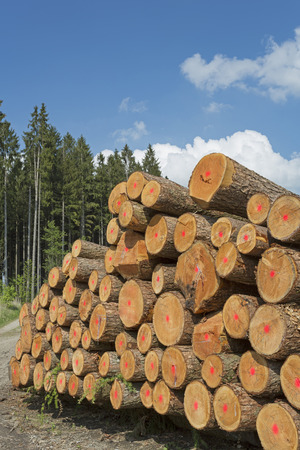 Wood industry in Germany